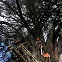 Fantastic Arborist in South Auckland